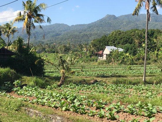 Anturan, Indonesien: photo0.jpg