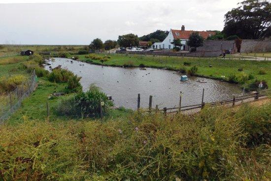 写真Blakeney Conservation Duck Pond枚