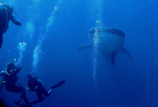 Magic Island Dive Resort: photo0.jpg
