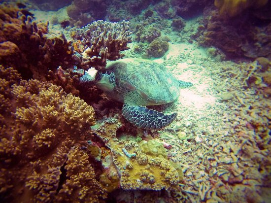 Magic Island Dive Resort: photo1.jpg