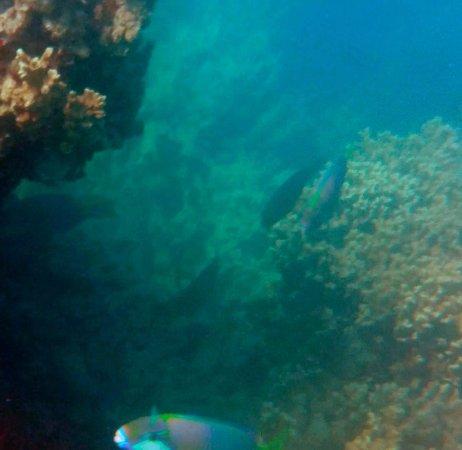 Ракираки, Фиджи: reef straight out the front