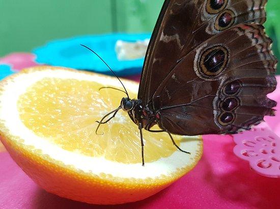 Butterfly House Varna : Butterfly
