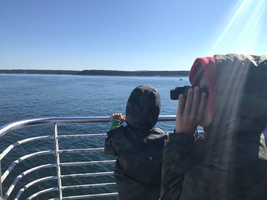 Bar Harbor Whale Watch Company : photo1.jpg