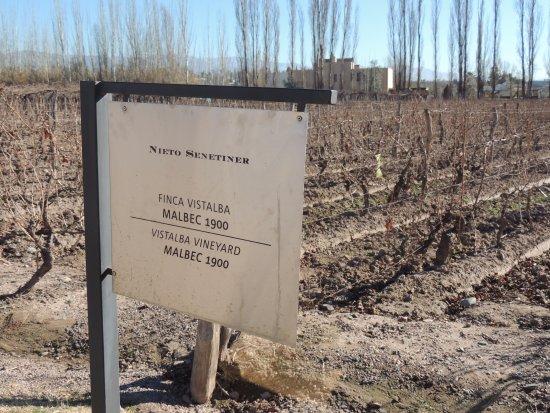 Bodegas Nieto Senetiner: Viñedos