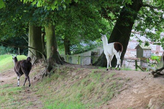 Bordeaux Saint Clair, Frankrig: Enclos lamas