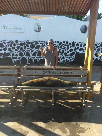 Galapagos Natural Life - Day Tours: IMG_20170224_085106_large.jpg