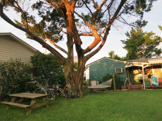 Hidden Treasure Inn: Giant cedar shades picnic table and hammock.