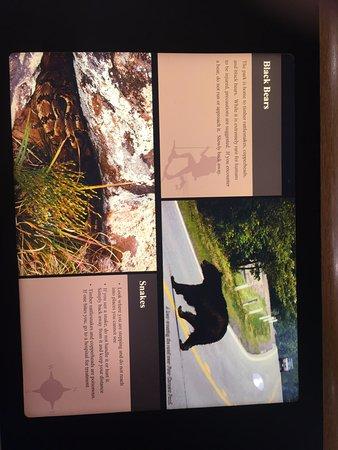 Tuxedo Park, Estado de Nueva York: Bears and Snakes in the area