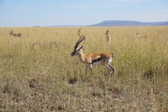Arusha Region, Tanzanya: photo5.jpg