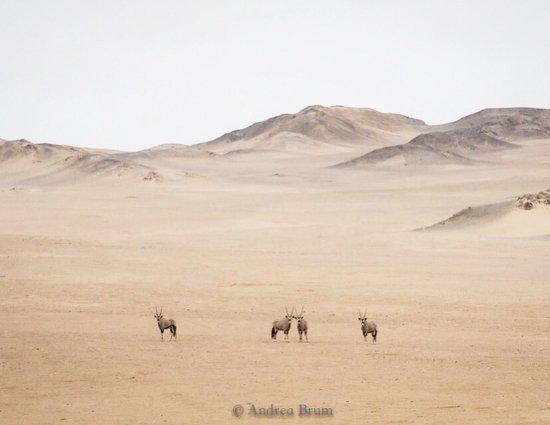 Skeleton Coast Park, Namibië: photo7.jpg
