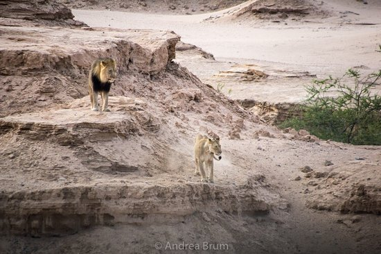 Skeleton Coast Park, Namibia: photo9.jpg
