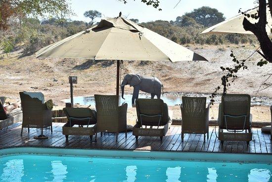 Savute Safari Lodge: Human pool and elephant pool