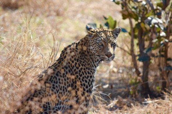 Savute Safari Lodge: On safari with Savuti Lodge