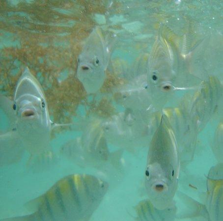 Sandos Playacar Beach Resort: Inquisitive Fish