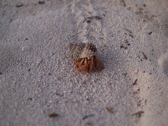 Sandos Playacar Beach Resort: Hermit Crab