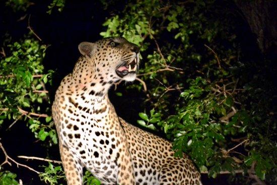 Rattray's on MalaMala: Evening photo safari