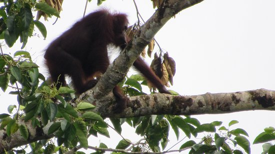 Tabin Wildlife Resort: photo2.jpg