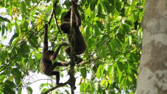 Tabin Wildlife Resort: photo3.jpg