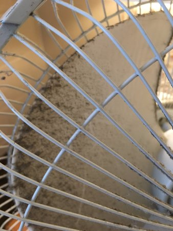 Shilo Inns Seaside Oceanfront: Dirty fan they provide since there's no air conditioning.