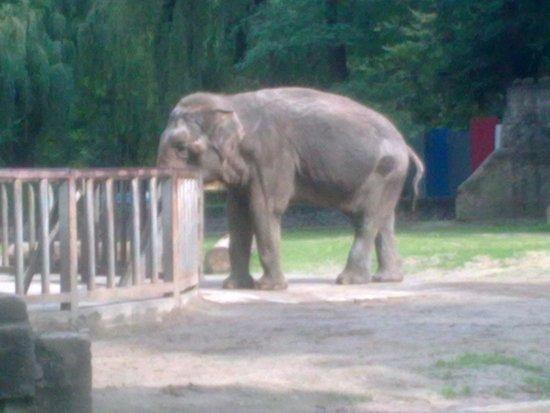 Lodz Zoo : Słoniątko:)