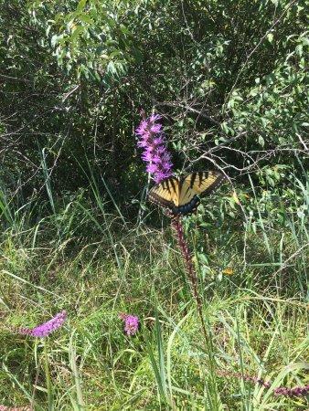 Eagle Creek Park: photo0.jpg