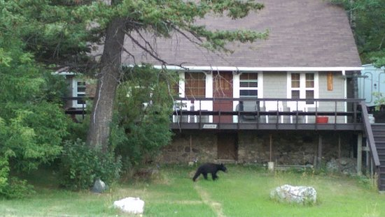 Crandell Mountain Lodge: View from Bear's Den room