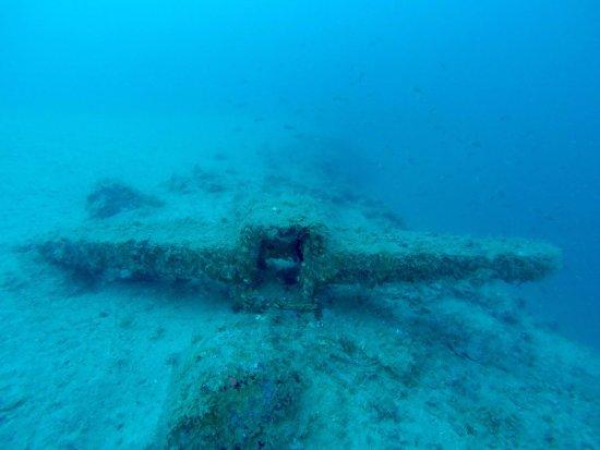 Tirrenian Diving Center: photo9.jpg