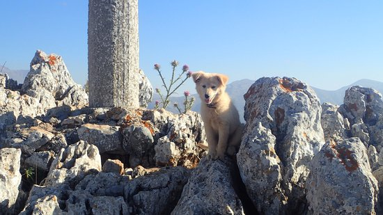 Lasithi Prefecture, Greece: Chien de Berger