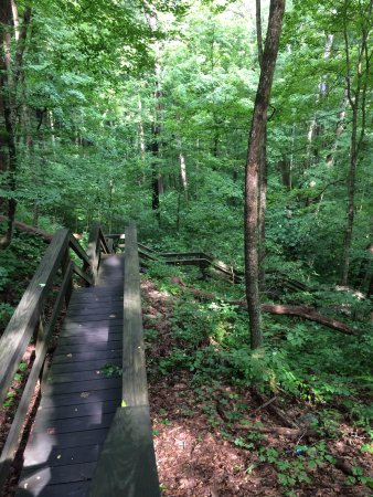 Canyon Inn: Summer green hardwood forest