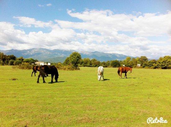 Ghisonaccia, France: Les chevaux au repos.