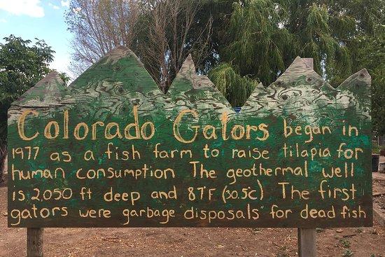 Monte Vista, CO: Colorado Gators nearby day trip