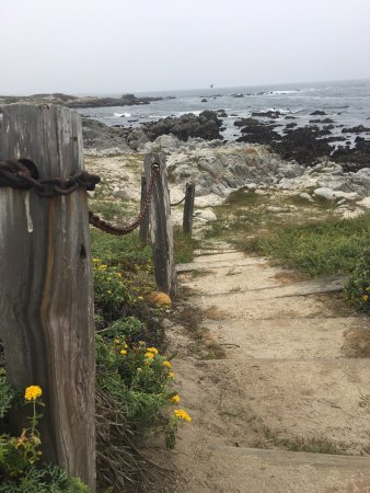 Asilomar State Beach: photo1.jpg