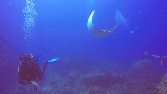 ‪‪Corn Islands‬, نيكاراجوا: Eagle ray -Blowing Rock-‬