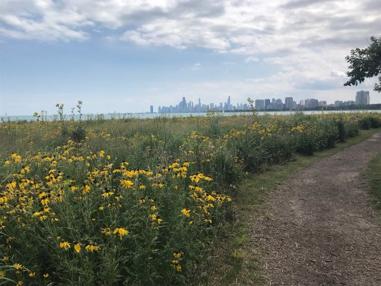 Montrose Beach: photo3.jpg