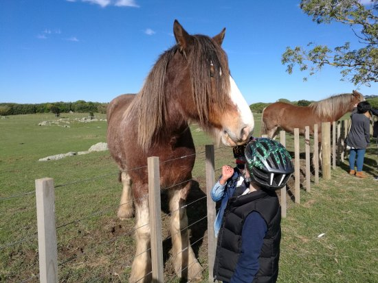 Ambury Park: Kids hand feeding very friendly horses