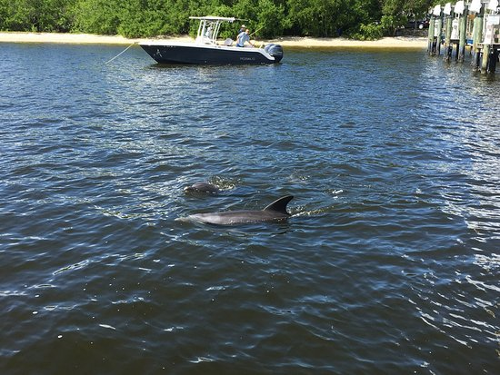 Fish-Tale Marina: Dolphins swimming close by the boat