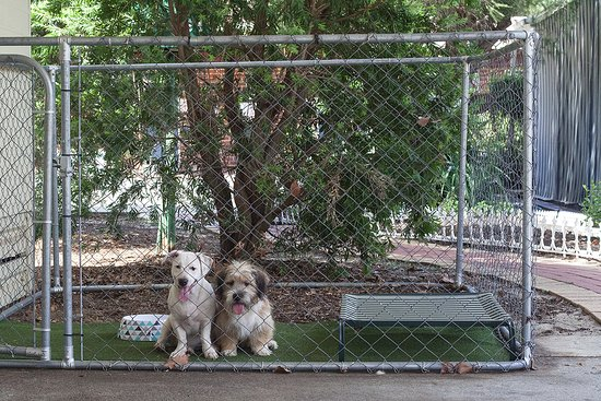Banksia Tourist Park: Dog Friendly Cabins