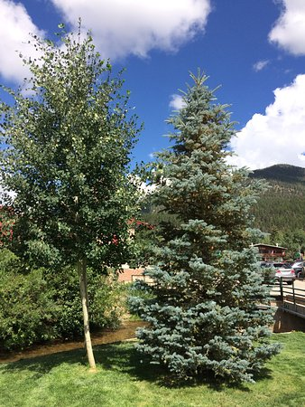Best Western Rivers Edge: Beautiful grounds