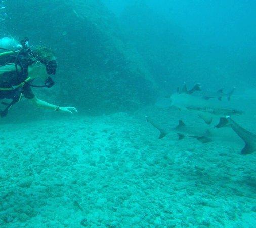 Drake Bay, Costa Rica: photo2.jpg