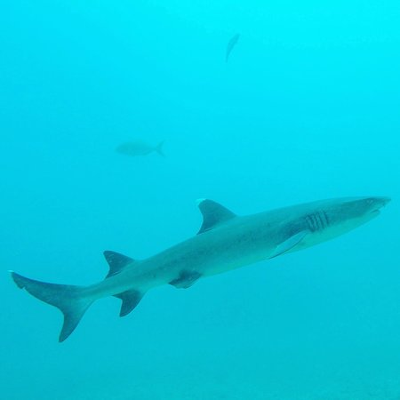 Drake Bay, Costa Rica: photo3.jpg