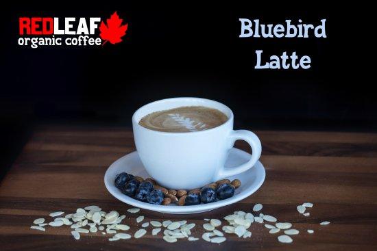 Longview, WA: Bluebird Latte