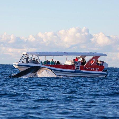 Vincentia, Australia: Local activities