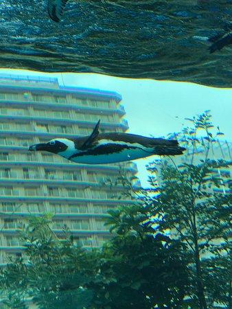 Sunshine Aquarium : photo0.jpg