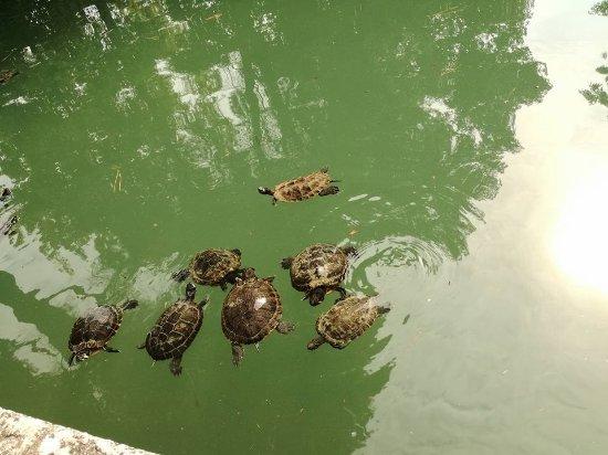Vasca Da Esterno Per Tartarughe : Vasca delle tartarughe foto di parco giardino sigurtà valeggio