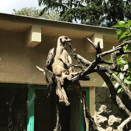 Debrecen Zoo and Botanical Garden : photo8.jpg