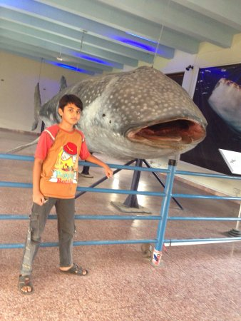 Pakistan Museum of Natural History (Islamabad) - 2019 All