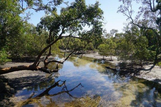 Myora Springs Conservation Area