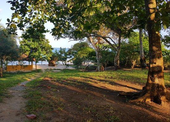 Mangrove Lodge: Path to beach