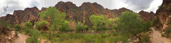 Grand Canyon Mule Tours by Xanterra: photo3.jpg