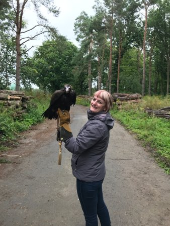 Herstmonceux, UK: Cruz, critically endangered Hooded Vulture just finishing up his tethered training today.